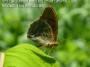 schmetterling-08-07-2010